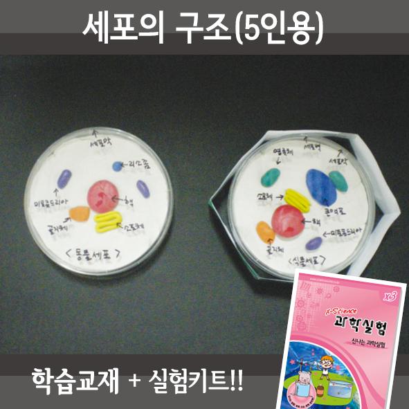 세포의구조(5인용세트)